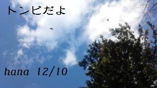 f:id:hanakabu:20161211000900j:plain