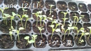 f:id:hanakabu:20161211142244j:plain