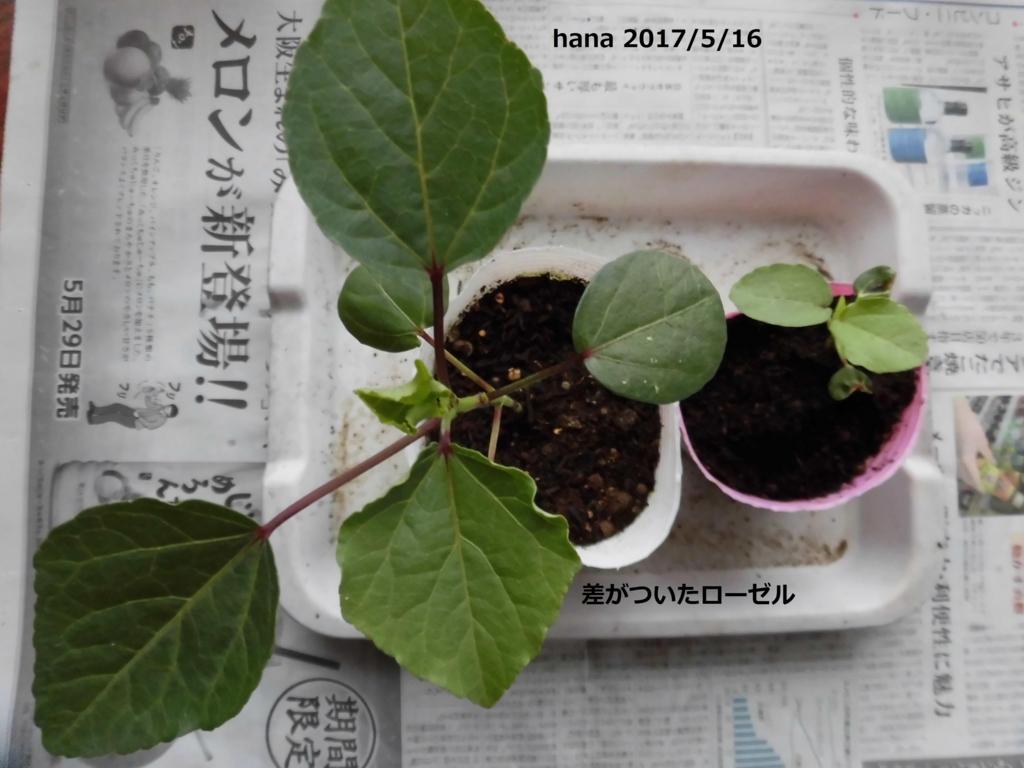 f:id:hanakabu:20170515091844j:plain