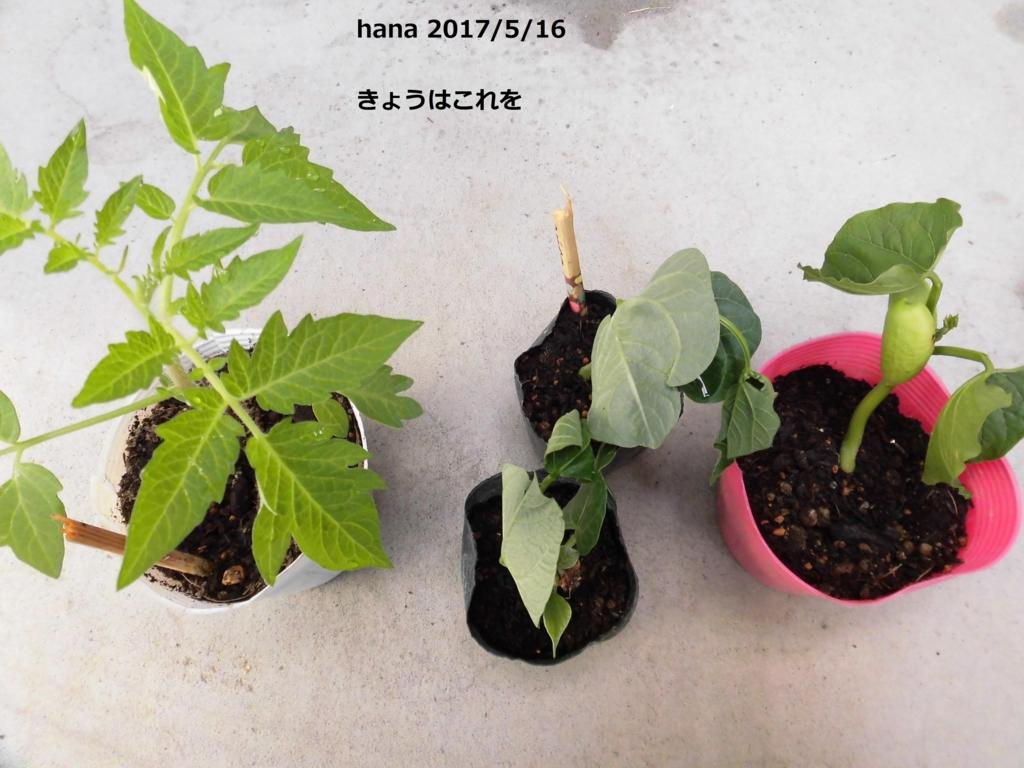 f:id:hanakabu:20170516102303j:plain