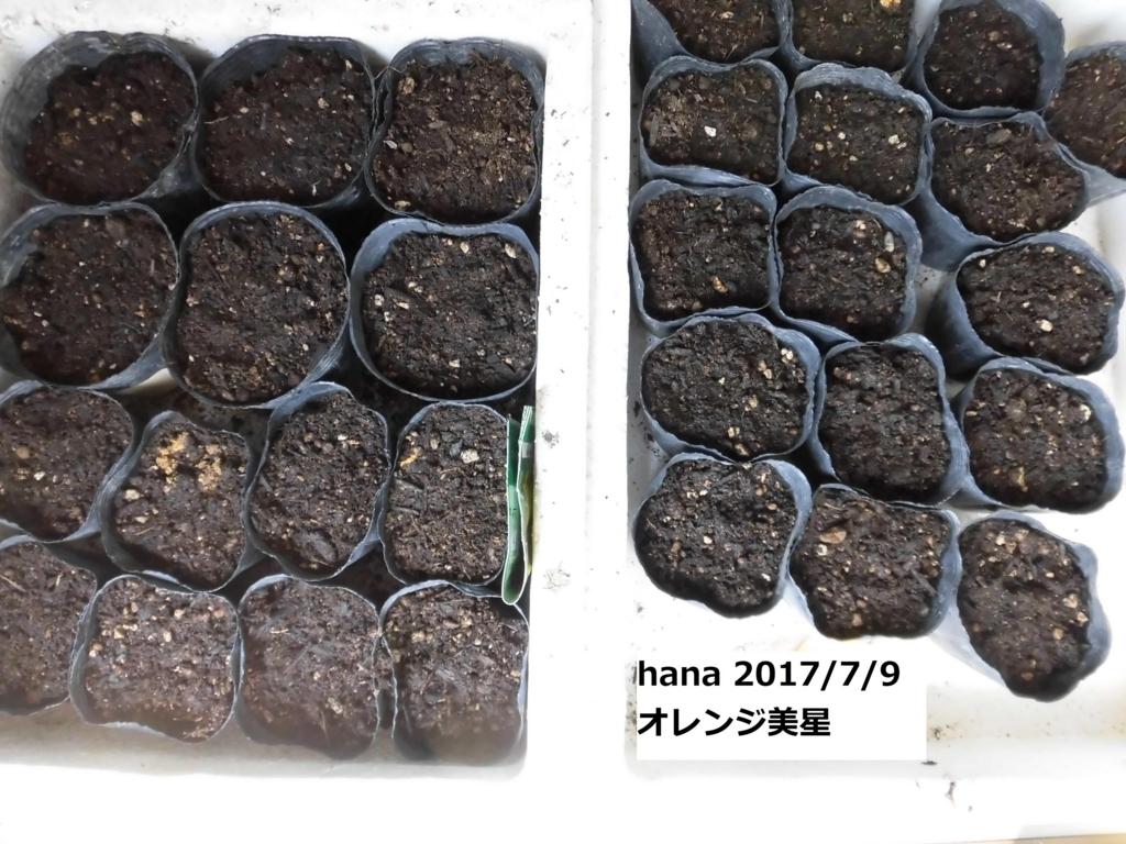f:id:hanakabu:20170709110802j:plain