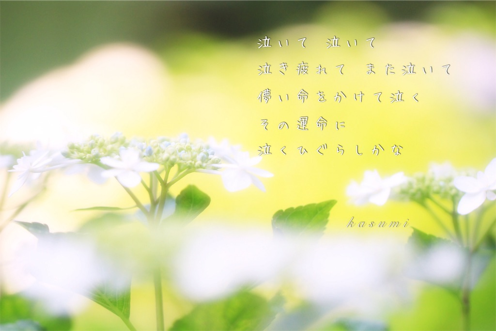 f:id:hanakasumi:20190723083245j:image
