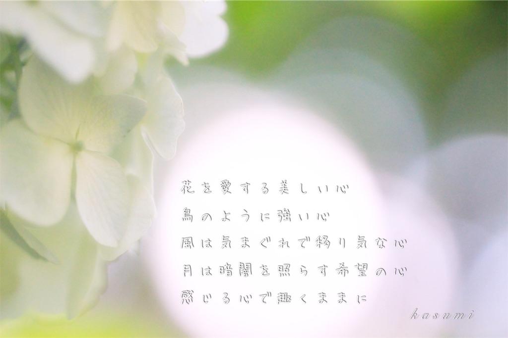 f:id:hanakasumi:20190723084025j:image