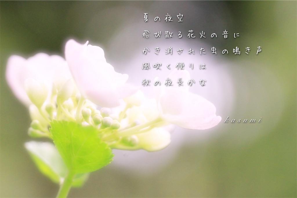 f:id:hanakasumi:20190723085432j:image