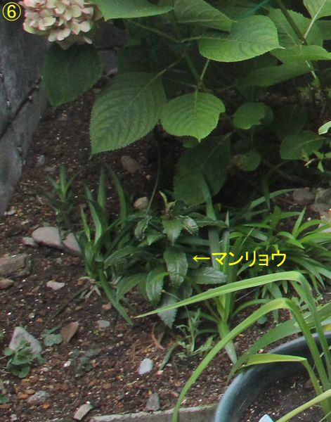 f:id:hanakuruma:20190705112729j:plain