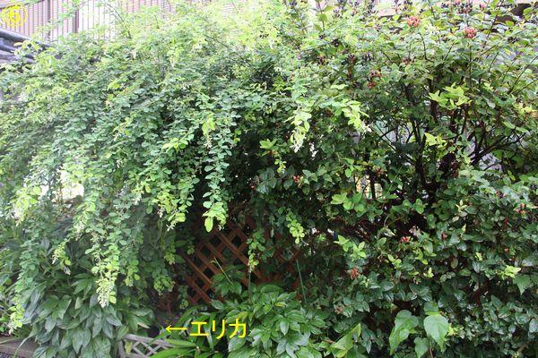 f:id:hanakuruma:20190719210420j:plain