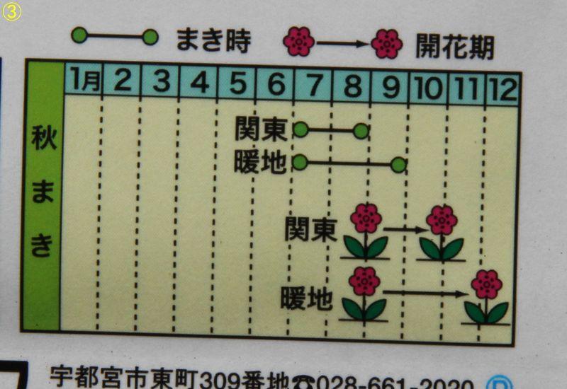 f:id:hanakuruma:20190731131630j:plain