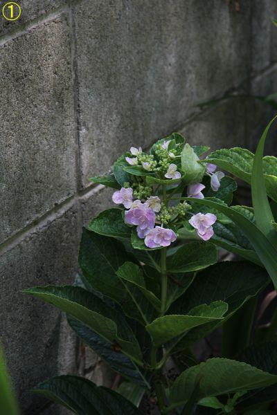 f:id:hanakuruma:20190819110112j:plain