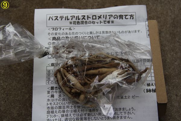 f:id:hanakuruma:20190830102522j:plain