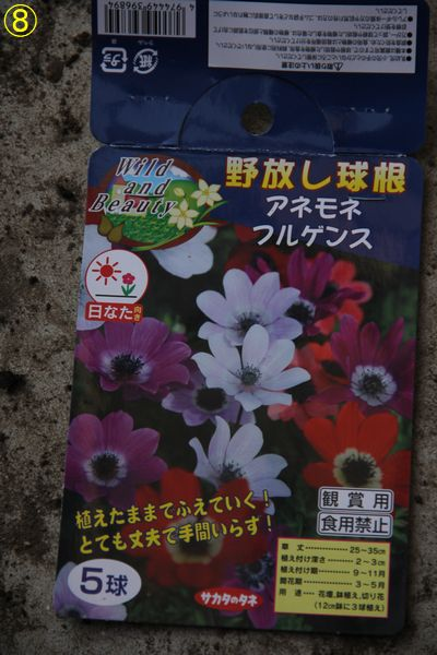 f:id:hanakuruma:20191111111044j:plain