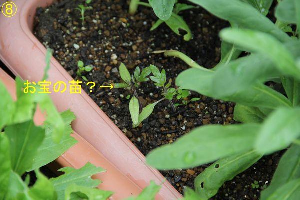 f:id:hanakuruma:20191211105032j:plain