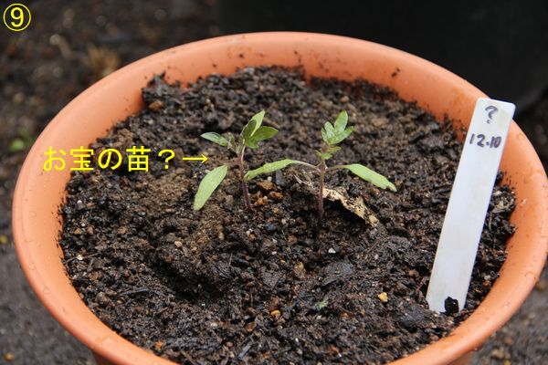 f:id:hanakuruma:20191211105057j:plain