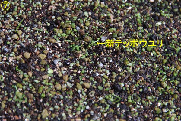 f:id:hanakuruma:20200106112400j:plain