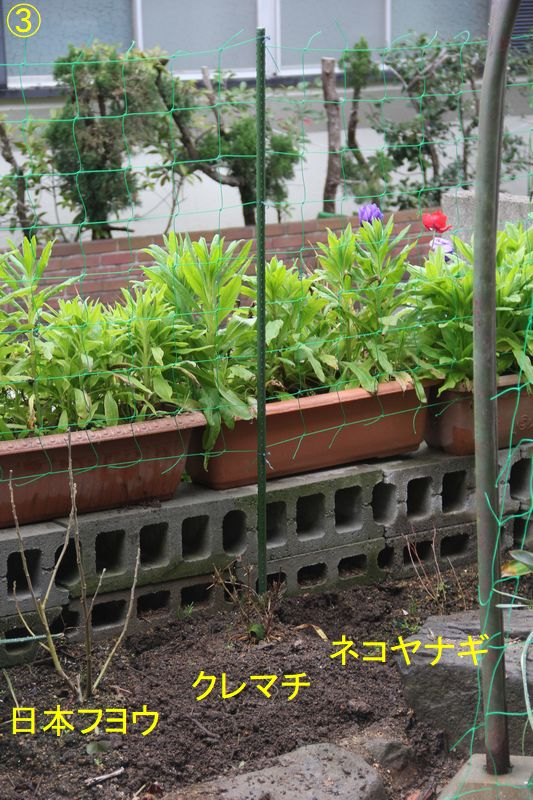 f:id:hanakuruma:20200229082633j:plain