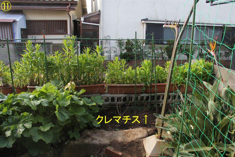 f:id:hanakuruma:20200306100635j:plain