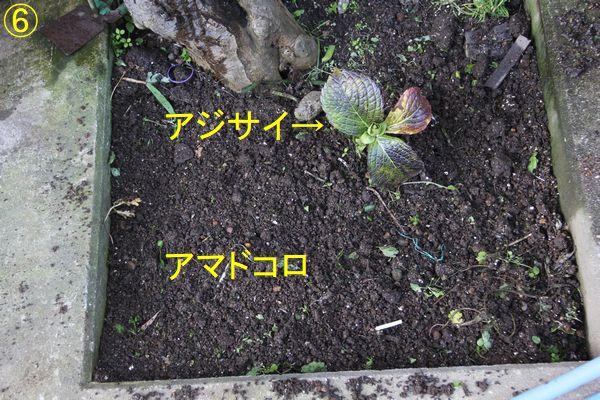 f:id:hanakuruma:20200317084008j:plain