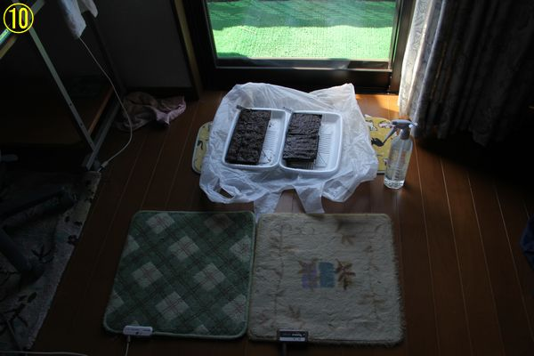 f:id:hanakuruma:20200325110142j:plain