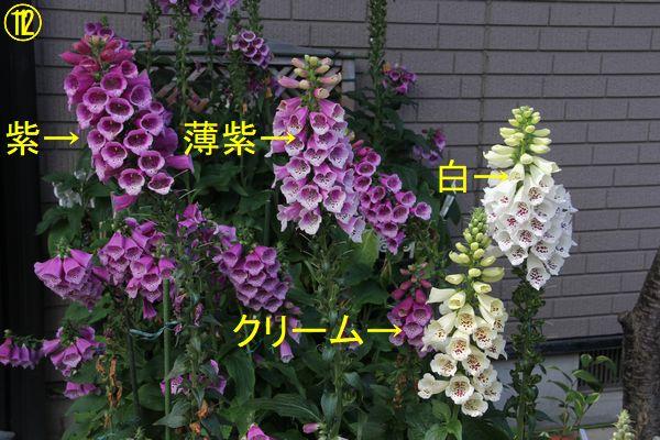 f:id:hanakuruma:20200522104932j:plain