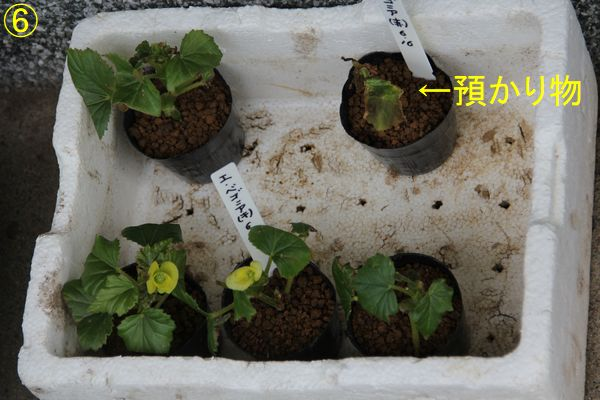 f:id:hanakuruma:20200630093034j:plain