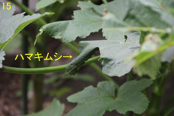 f:id:hanakuruma:20200921102937j:plain