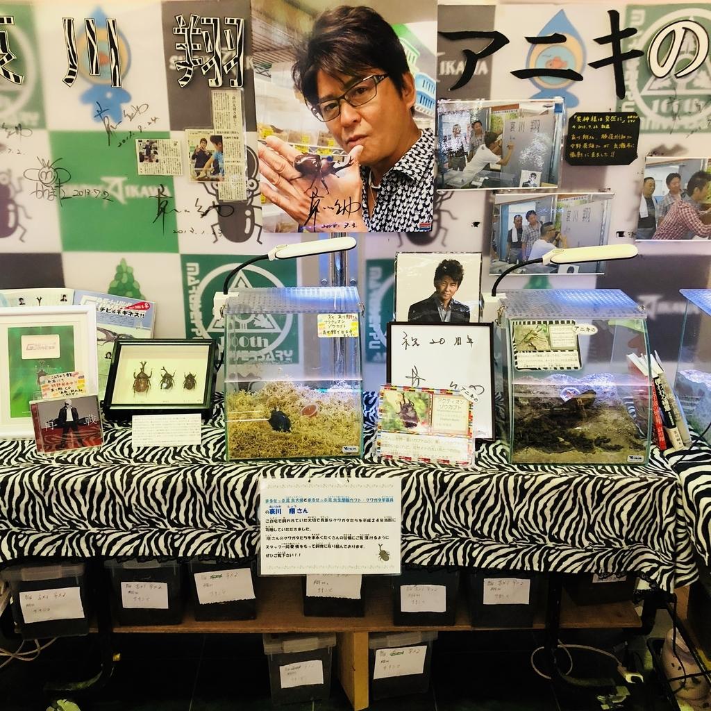 哀川翔さんの昆虫展示コーナー