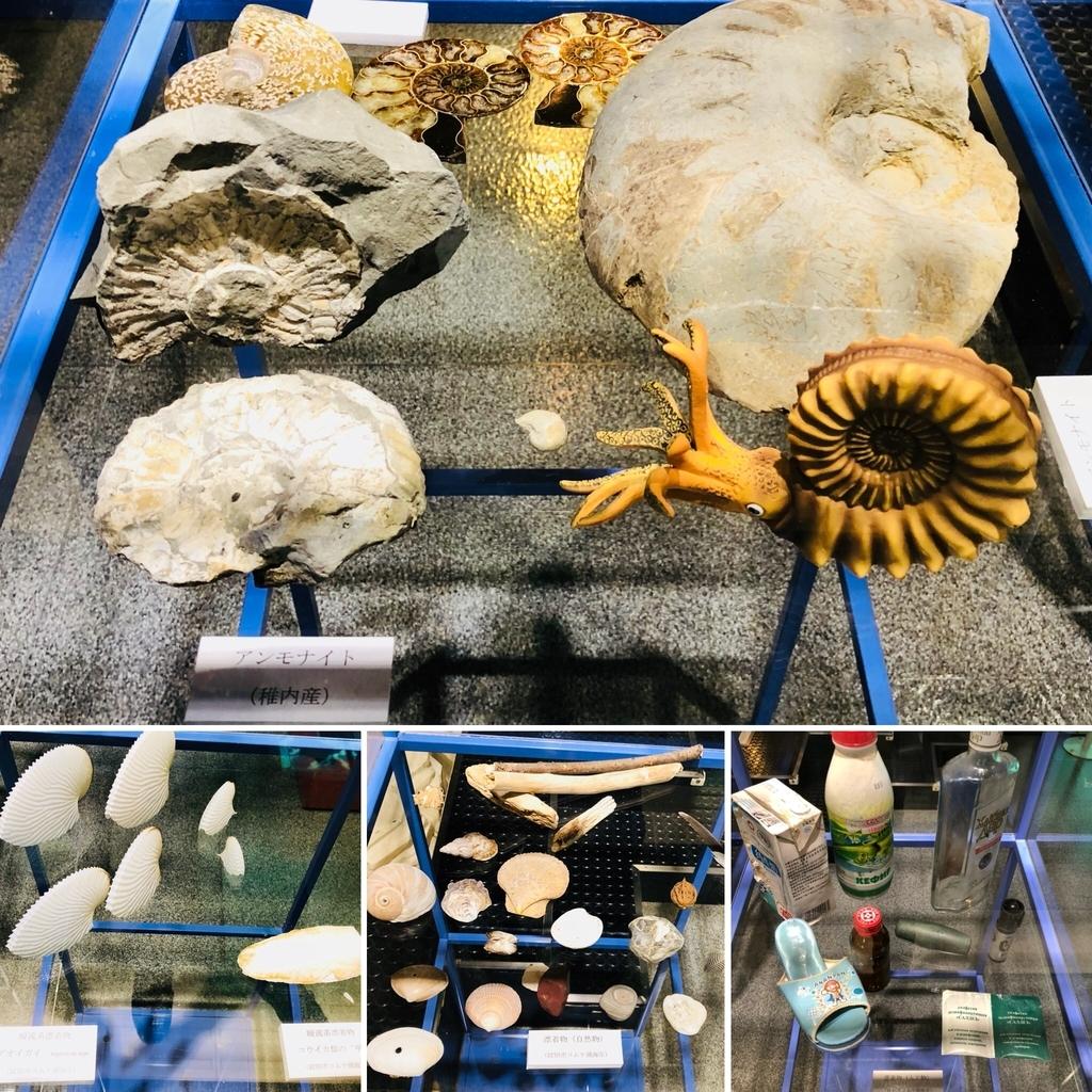 北海道の化石とオホーツク海の海岸への漂着物