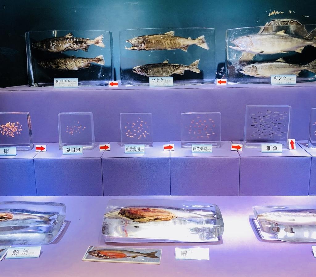 透明度の高い氷に保存され展示された鮭