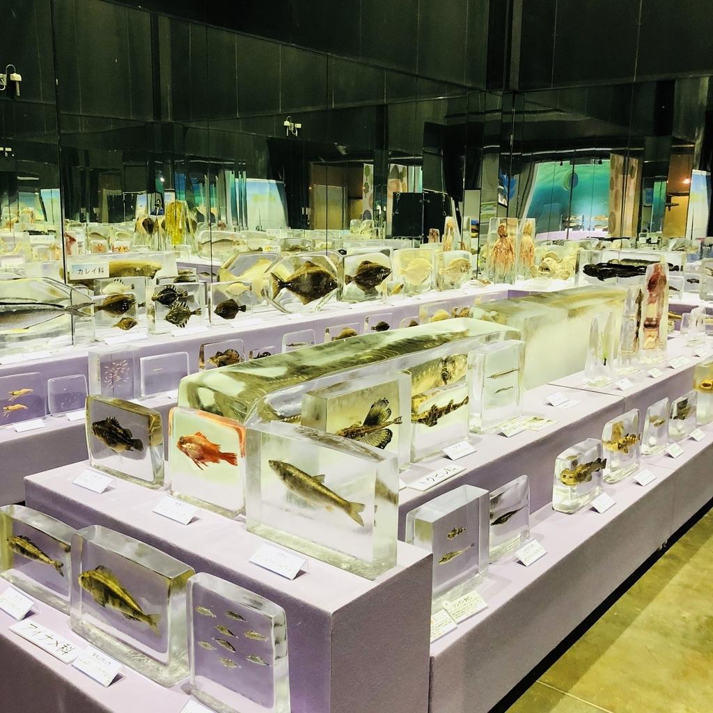 流氷水族館の展示数は多く見応えがあります