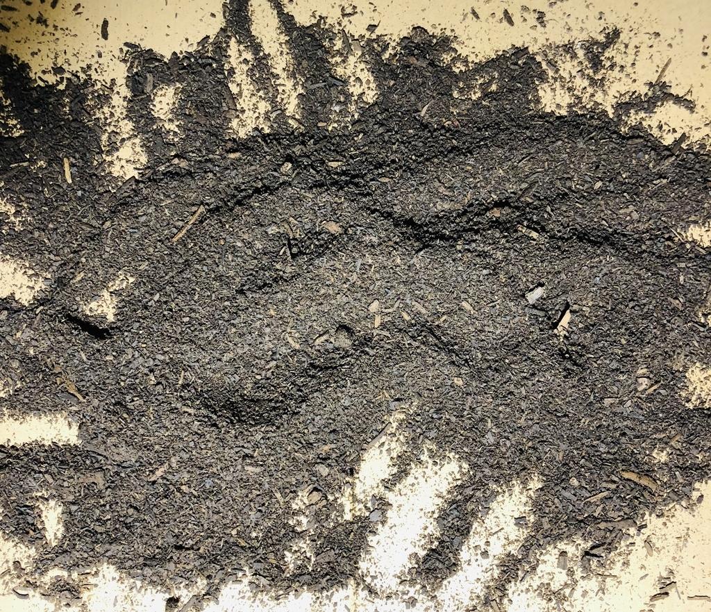カブトムシのマットを広げて卵の確認