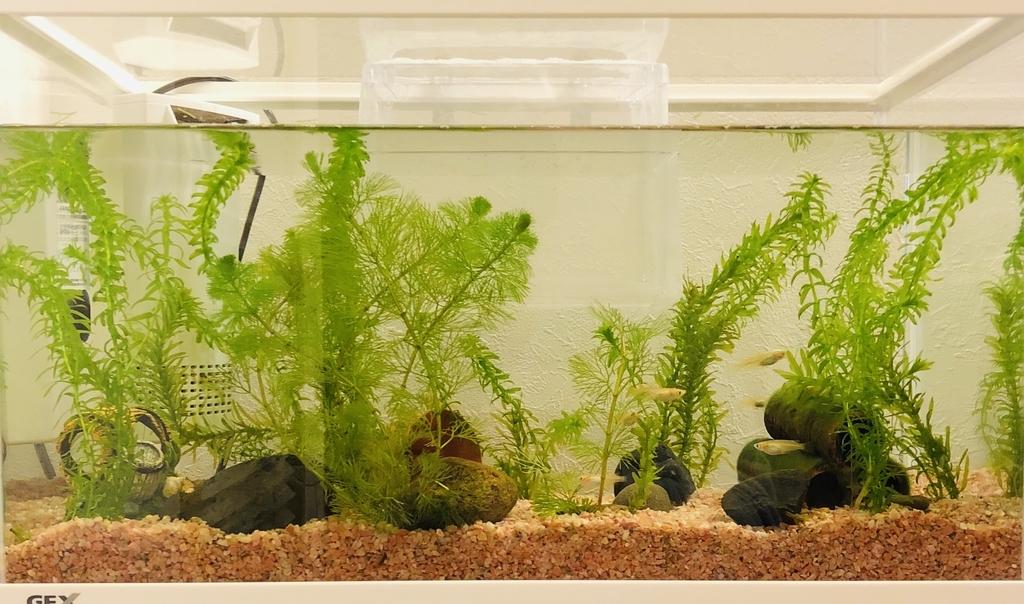 環境を整えた幅50cmの水槽