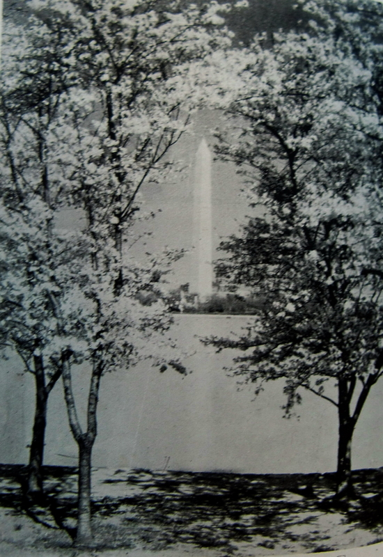 f:id:hanamizuki-nitibeiyuko:20111224123823j:image