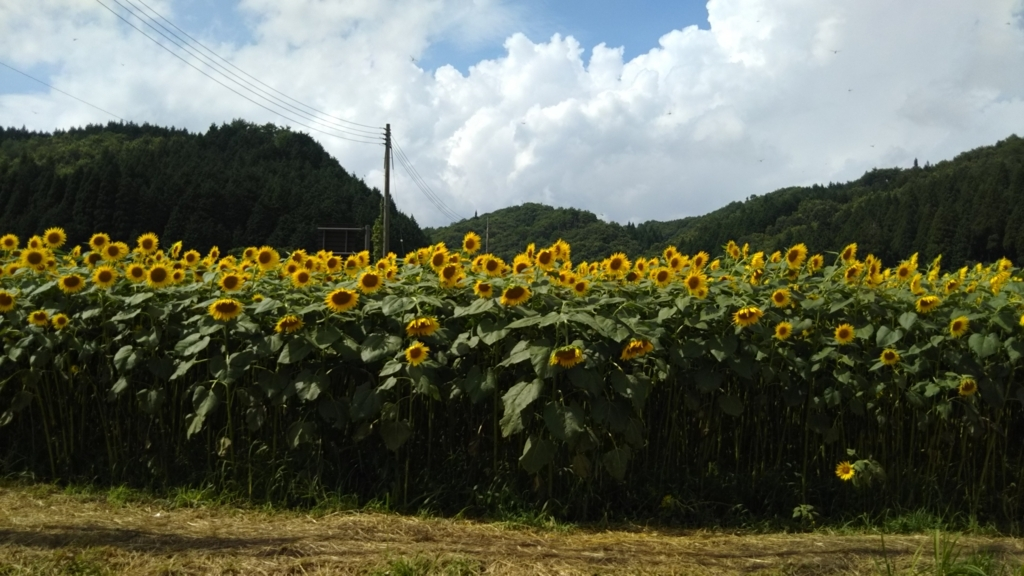 f:id:hanamizuki2711:20170817222037j:plain