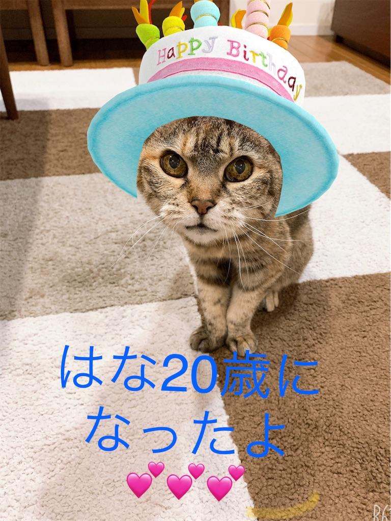 f:id:hananekochang:20200505153645j:image