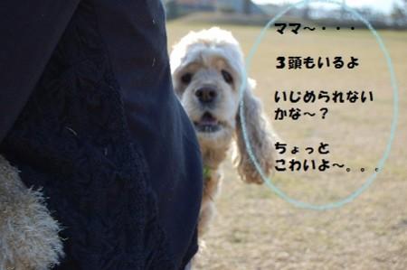 f:id:hanarinn:20100118152757j:image