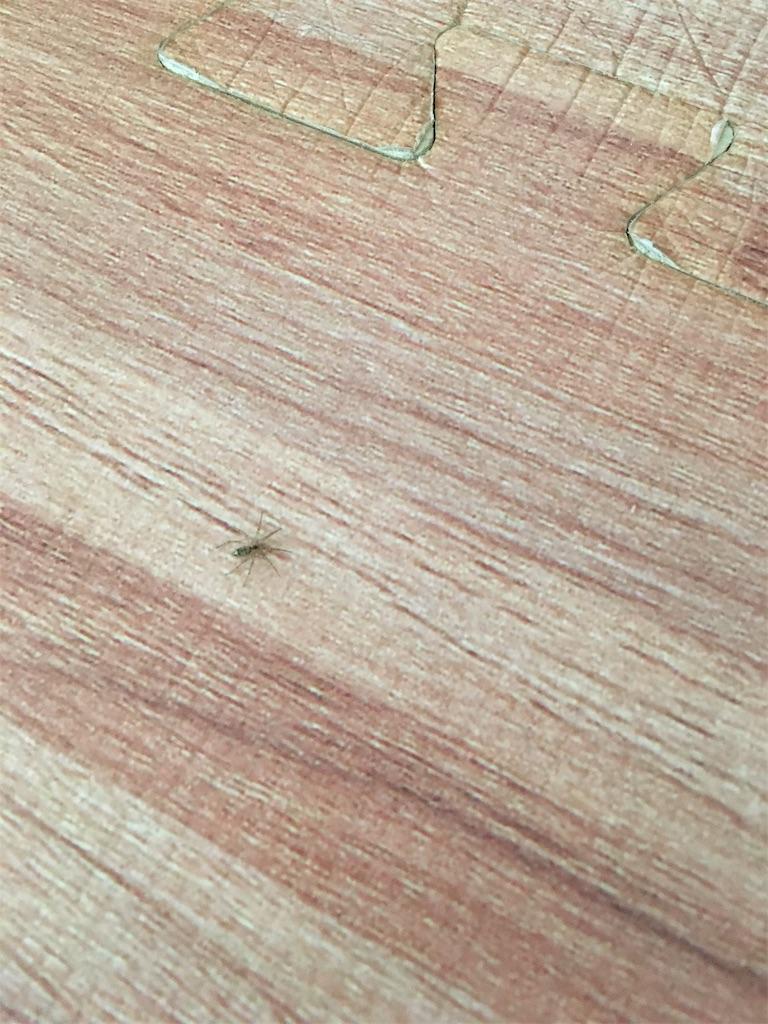 リビングの床にいた小さなクモ