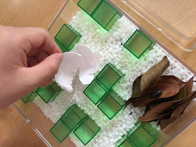 卵の殻と落ち葉
