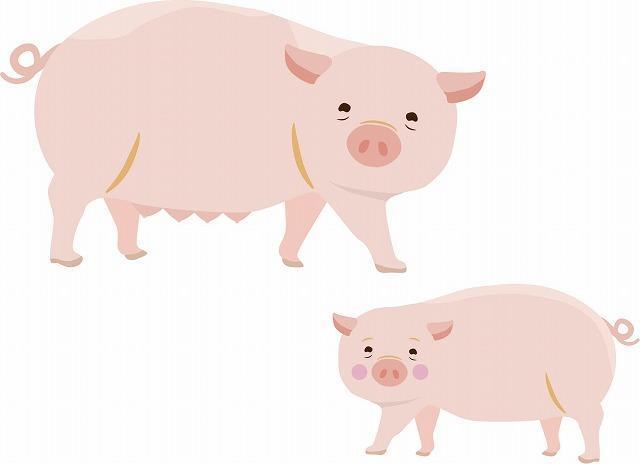 豚肉のイメージイラスト