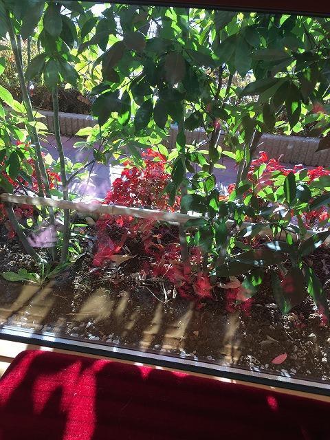 コメダ珈琲の花壇