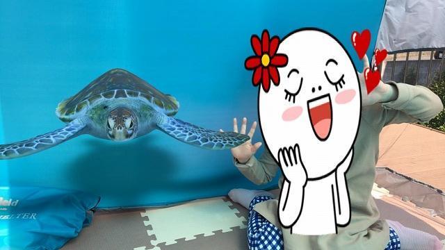 動物3Dのウミガメと一緒に
