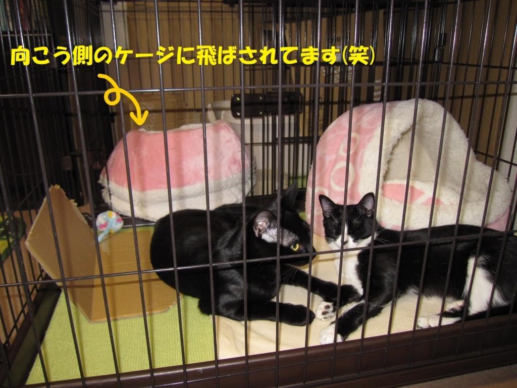 f:id:hanatanmama:20180201162703j:plain