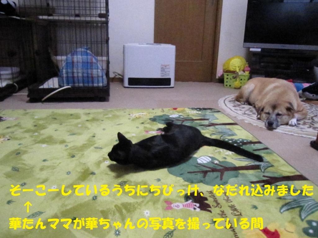 f:id:hanatanmama:20180225223027j:plain