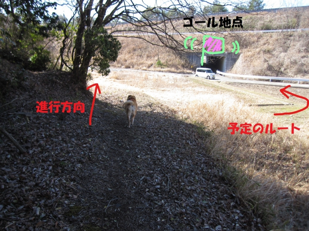 f:id:hanatanmama:20180310144451j:plain
