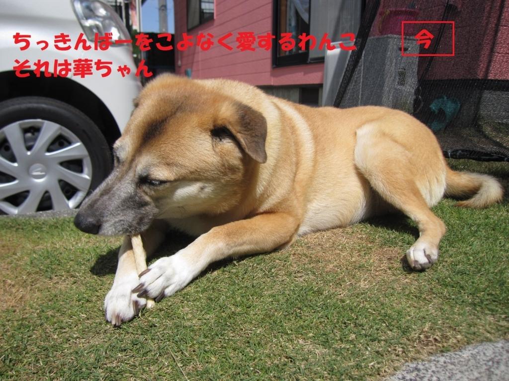f:id:hanatanmama:20180404145227j:plain