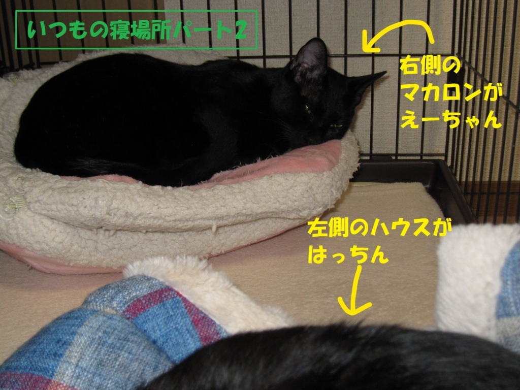 f:id:hanatanmama:20180414150512j:plain