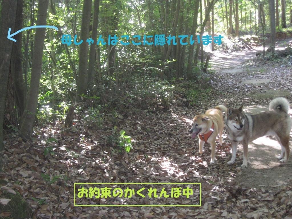 f:id:hanatanmama:20180520150233j:plain