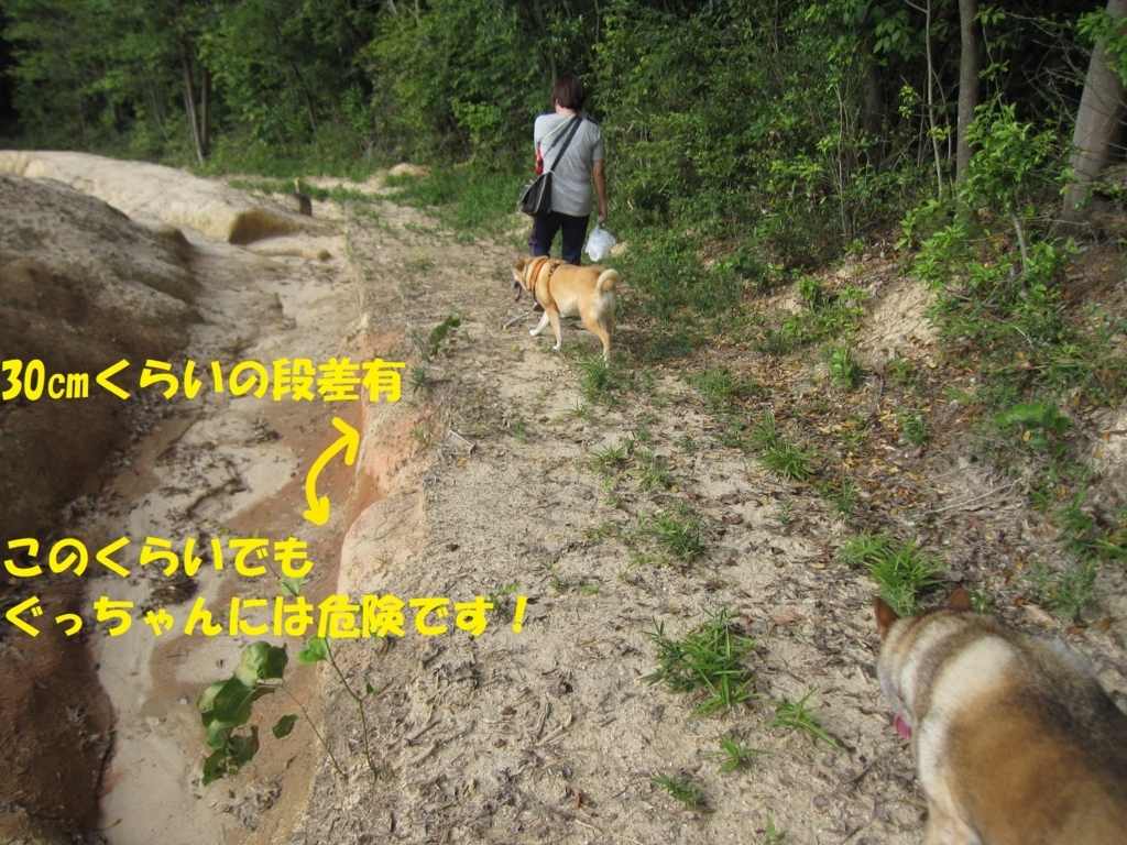 f:id:hanatanmama:20180722152209j:plain
