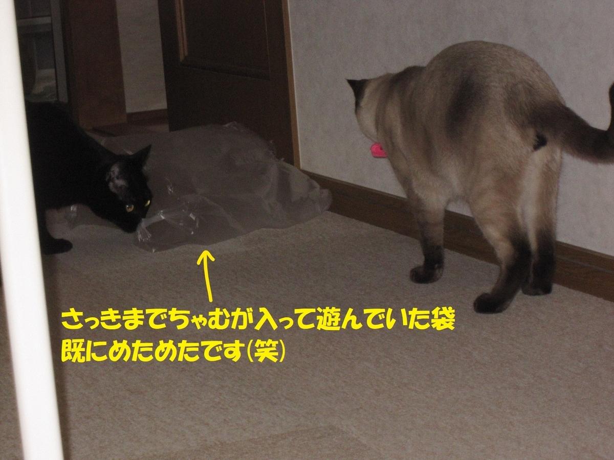 f:id:hanatanmama:20200216212456j:plain