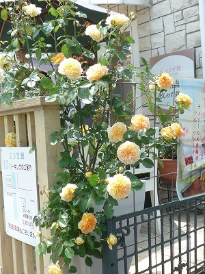 f:id:hanatokaori:20110523212724j:image