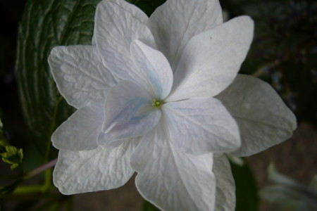 f:id:hanatomi:20080610183326j:image