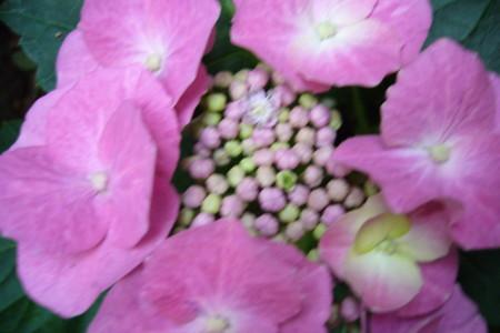 f:id:hanatomi:20080610183404j:image